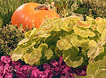 Vegetables grow beautifully alongside ornamentals.