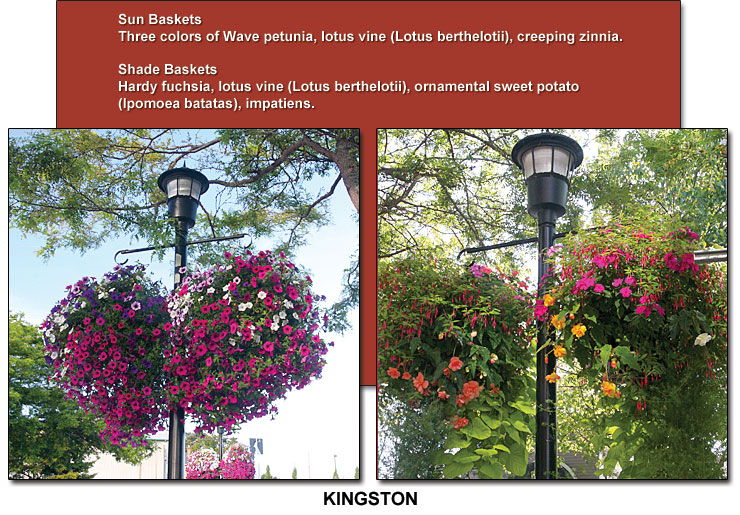 Kingston's summer flower baskets