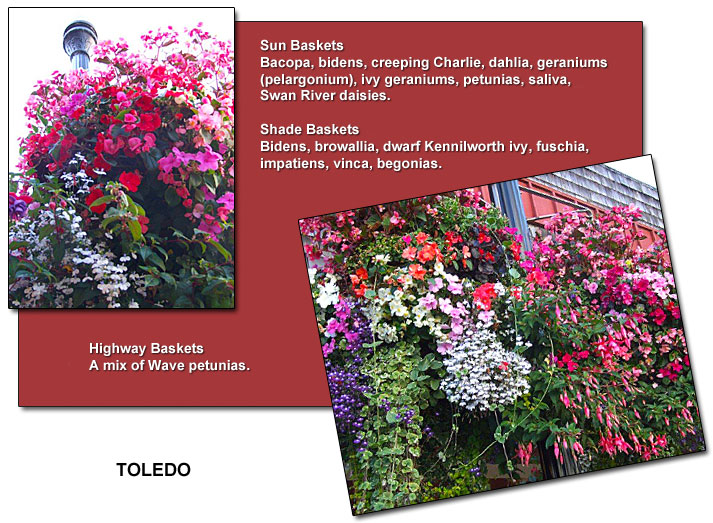 Toledo's summer flower baskets