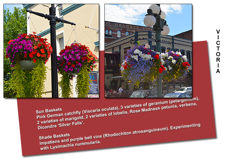 Victoria's summer flower baskets
