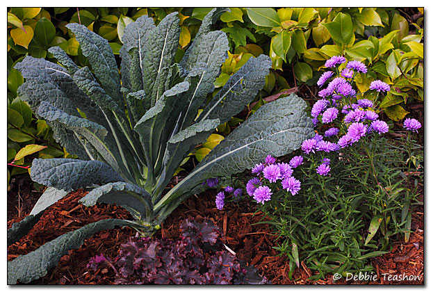 Kale, Aster and Heuchera