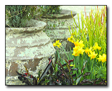 Pottery and daffodils