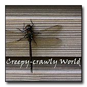 Creepy-crawly world
