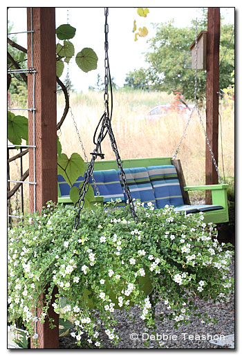 Bench Swing and cushions