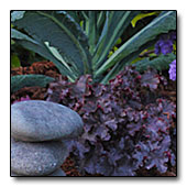 Heuchera and Kale