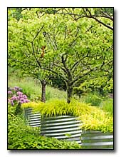 Fruit tree containers