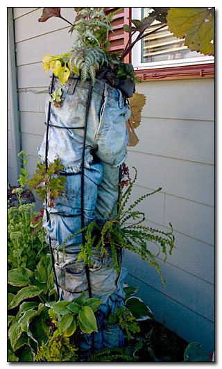 A planter made of old jeans.