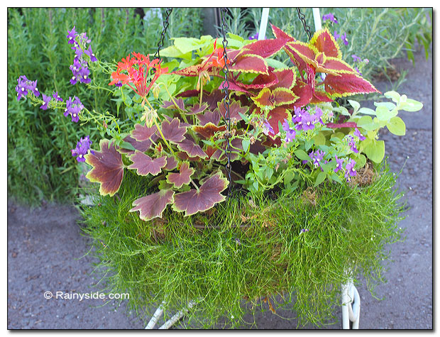 A new spin on a moss-lined wire basket