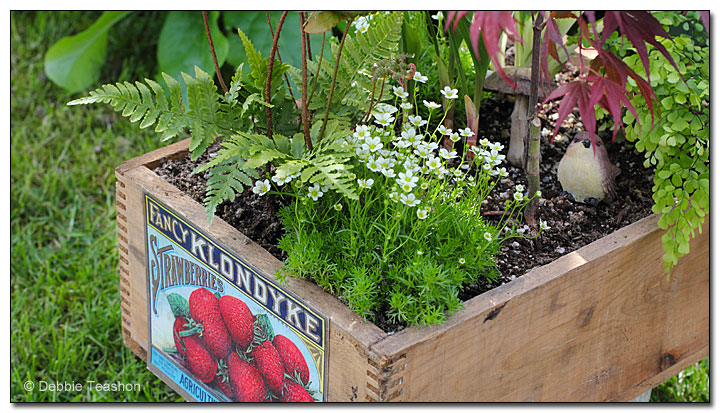 Apple boxes as planters