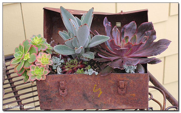 Rusty tool box filled with succulent plants