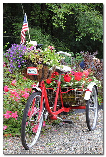 Full size tricycle planter