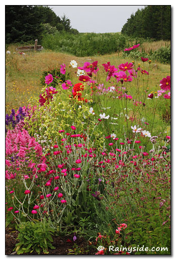 Boreas Inn Annual Border Plantings