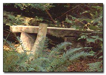 Rustic bench in the woods