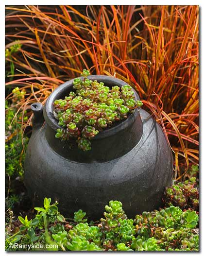 Sedum and grass